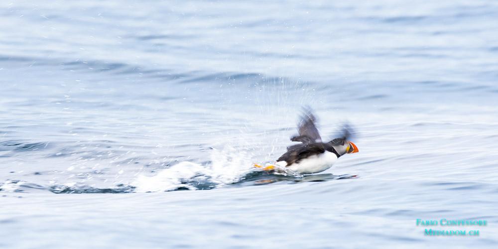 Schottland – Puffins auf Handa Island